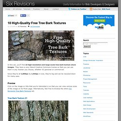 10 High-Quality Free Tree Bark Textures