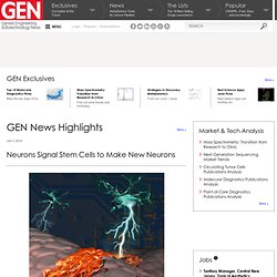News Highlights:Neurons Signal Stem Cells to Make New Neurons