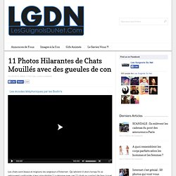 11 Photos Hilarantes de Chats Mouillés avec des gueules de con