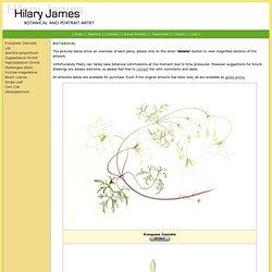 Hilary James - Botanical Art