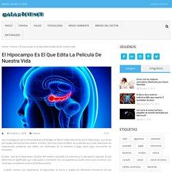 El hipocampo es el que edita la película de nuestra vida - GalarScience
