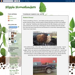 Hippie Homesteaders