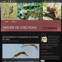 Hippocampes et Syngnathes de l'étang de Thau - Nature de chez nous