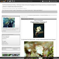Hippocampus Colemani - Le blog de Pim's