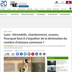 Lyon : Hirondelle, chardonneret, coucou. Pourquoi faut-il s'inquiéter de la diminution du nombre d'oiseaux communs ?