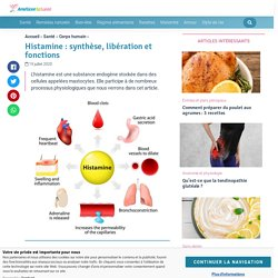 Histamine : synthèse, libération et fonctions