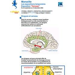 Les drogues et le cerveau. Museum d'Histoire Naturelle de Marseille