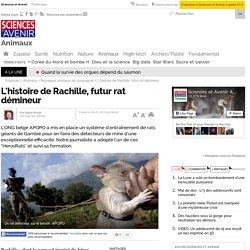 L'histoire de Rachille, futur rat démineur