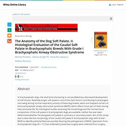 The Anatomy of the Dog Soft Palate. II. Histological Evaluation of the Caudal Soft Palate in Brachycephalic Breeds With Grade I Brachycephalic Airway Obstructive Syndrome - Pichetto - 2011 - The Anatomical Record: Advances in Integrative Anatomy and Evolu