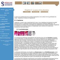 Histologie: organes, systèmes et appareils - Niveau PCEM2- DCEM1