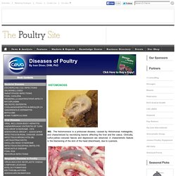 HISTOMONOSIS - Diseases of Poultry