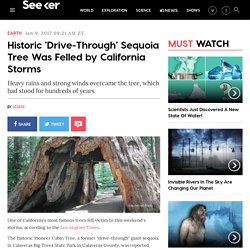 Historic 'Drive-Through' Sequoia Tree Was Felled by California Storms