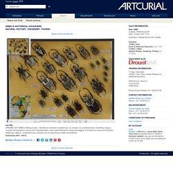 A R T C U R I A L Arms & Historical SouvenirsNatural History, Taxidermy, Fishing - Sale N° 2948 - Lot N° 358