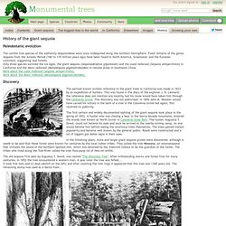 History of the giant sequoia