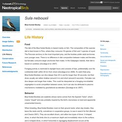 Life History - Blue-footed Booby (Sula nebouxii) - Neotropical Birds