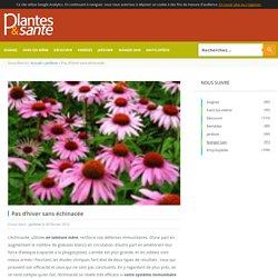 Pas d'hiver sans échinacée - Plantes & Santé