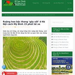 Ruộng hoa bậc thang 'gây sốt' ở Hà Nội cách Mỹ Đình 15 phút lái xe