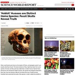 'Hobbit' Humans are Distinct Homo Species: Fossil Skulls Reveal Truth