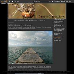 Hoëdic, séjour du 14 au 19 octobre - Le blog des Naturalistes