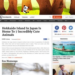 Hokkaido Island In Japan Is Home To 7 Unique Animals
