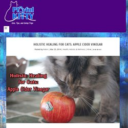 Holistic Healing for Cats: Apple Cider Vinegar - Playful Kitty