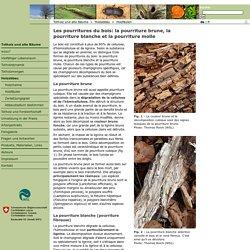Totholz und alte Bäume > Holzabbau > Holzfäulen: Braunfäule, Weissfäule und Moderfäule