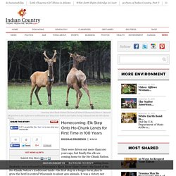 Homecoming: Elk Step Onto Ho-Chunk Lands for First Time in 100 Years