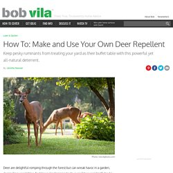 Homemade Deer Repellent and How to Use It