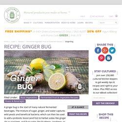 Homemade Ginger Bug Recipe