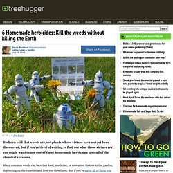 6 Homemade herbicides: Kill the weeds without killing the Earth