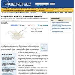 Using Milk As A Natural, Homemade Pesticide