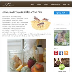4 Homemade Traps to Get Rid of Fruit Flies