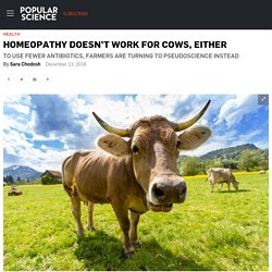 Homeopathy doesn't work for cows, either