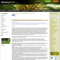 La fibromyalgie ou maladie de la fatigue chronique