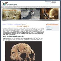 Homo habilis. En Images