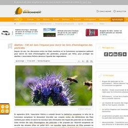 Abeilles: l'UE est dans l'impasse pour durcir les tests d'homologation des pesticides
