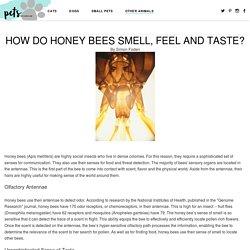How Do Honey Bees Smell, Feel and Taste?