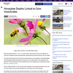 Honeybee Deaths Linked to Corn Insecticides