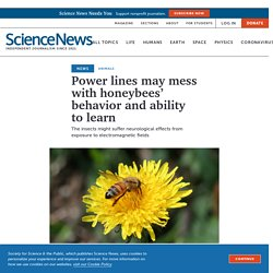 Power lines may mess with honeybee learning and behavior