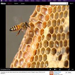 honeybee137LK