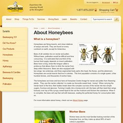 About Honeybees - Honeybee Centre