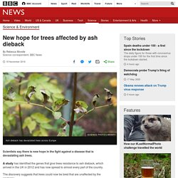 BBC 18/11/19 New hope for trees affected by ash dieback