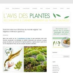Tour d'horizon du monde végétal : les végétaux inférieurs (partie 2)