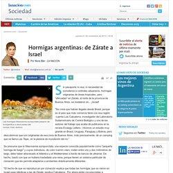 Hormigas argentinas: de Zárate a Israel