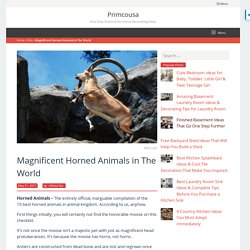 (19+) Best Horned Animals in The World [MAGNIFICENT HORNS]