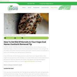 How to Get Rid of Hornets in Your Cape Cod Home: Control & Removal Tip
