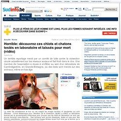 Horrible: découvrez ces chiots et chatons testés en laboratoire et laissés pour mort (vidéo