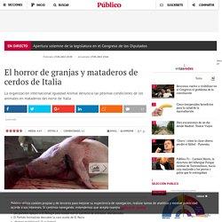 El horror de granjas y mataderos de cerdos de Italia