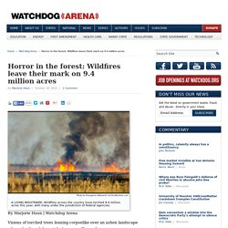Horror in the forest: Wildfires leave their mark on 9.4 million acres