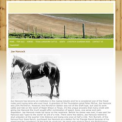 Horses of Reference -